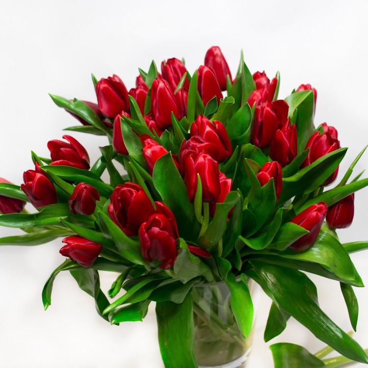 29 червоних тюльпанів - image-0