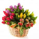 Тюльпани в кошику - image-0