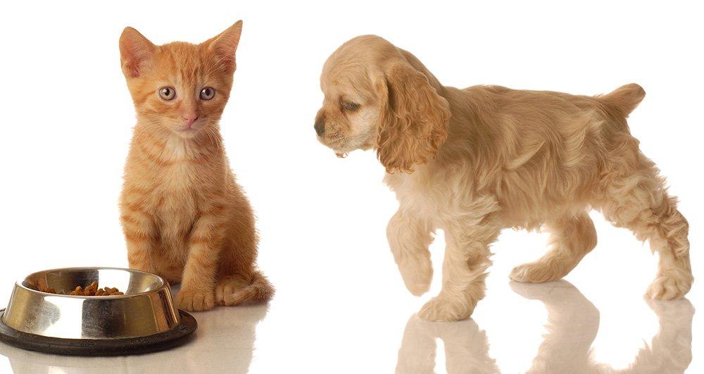 Корм для тварин